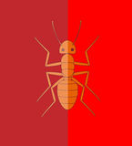 Fire Ant. Wild Creepy Fire Ant Insect Vector Illustration Stock Photo