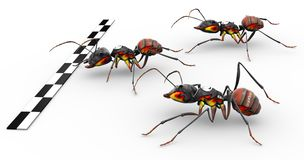 Fire Ants Crossing Finish Line. Three fire ants crossing the finish line ready for victory Royalty Free Stock Photos