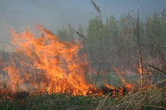 Fire approaching to the forest. Field on fire, wildfires, burning grass,fire approaching to the forest Stock Photos