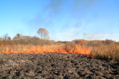 Fire on autumn field Royalty Free Stock Photos