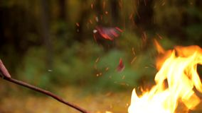 Fire in the autumn forest. Danger of forest fire - smoke and flame. Barbecue. Fire in the autumn forest. Danger of forest fire - smoke and fire on the field near stock video footage