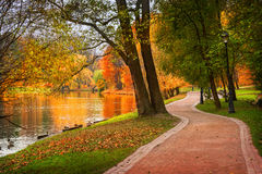 Fire autumn. Autumn park with golden trees and a pond with ducks Royalty Free Stock Photos