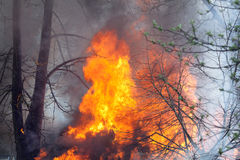 Fire Base of Tree Stock Photo