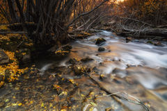 Fire Behind the Trees. Autumn colors on a slow motion river in the Wasatch mountains of Utah USA Royalty Free Stock Image