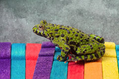 Fire Belly Toad Stock Photo