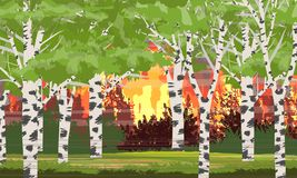 Fire in birch forest. Burning trees. Wildfire. Catastrophe. vector illustration