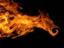Fire bird Stock Photography