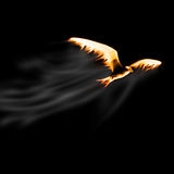 Fire bird Royalty Free Stock Images