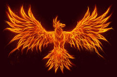 Fire bird. Illustration of flying Bird Phoenix made of fire Stock Photography