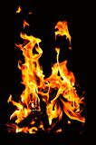 Fire on a black background stock photography
