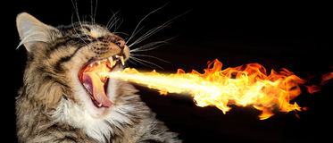 Fiery Cat Royalty Free Stock Photography Image 15278067