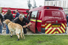 A fire brigade dog isprepared for action Royalty Free Stock Photo