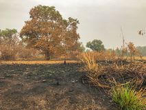 After fire burn forest become arid Stock Photography