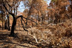 After fire burn forest become arid. And need improvement Stock Photos