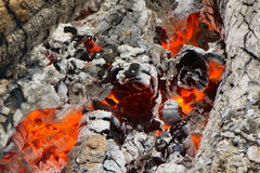 Fire and burned charcoal. Burned charcoal and ash from fire Royalty Free Stock Image