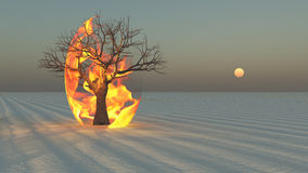 Fire burning around tree in desert. Sands Stock Photo