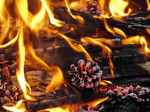 Fire burning ash Royalty Free Stock Photo