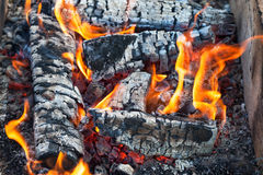 Fire burning in a campfire Stock Photography