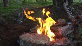 Fire burning campfire in the woods. Royalty Free Stock Photo