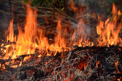 Fire burning dry branch. Royalty Free Stock Photography