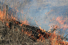 Fire burning dry grass Royalty Free Stock Photo