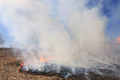 Fire burning dry grass dangerously Royalty Free Stock Photography