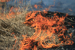 Fire burning dry grass dangerously Stock Image