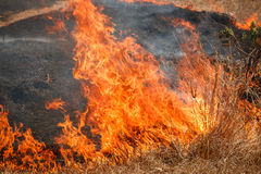 Fire burning dry grass field in Thailand Royalty Free Stock Images