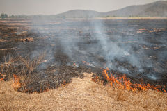 Fire burning dry grass field in Thailand Stock Photo