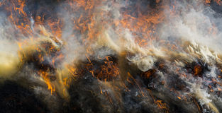 Fire - burning dry grass Royalty Free Stock Image