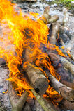Fire of burning dry wood Royalty Free Stock Image