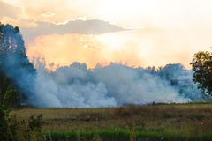 Fire burning field Royalty Free Stock Image