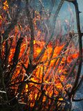 Fire burning flame branches the smoke water stock images