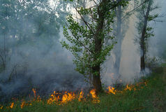 Fire burning in a forest Royalty Free Stock Photos