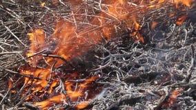 Fire burning grass stock video