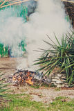 The fire is burning in nature. Green ald painting bamboo wall.  Royalty Free Stock Photo