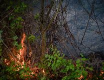 Fire burning plants and trees in a forest disaster royalty free stock image
