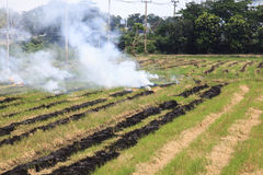 Fire burning rice straw Royalty Free Stock Image