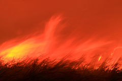 Fire burning wild through bushland Stock Photography