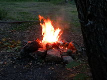 Fire. A fire burning in the woods Royalty Free Stock Photos