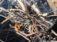 Fire burns. Dry twigs smoke Stock Photography