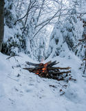 Fire burns in the snow in the woods, on a background of snow-covered firs Stock Photos