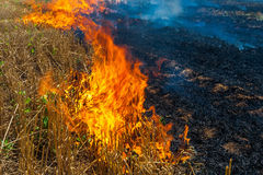 Fire Burns Stubble On The Field Destroy Summer Royalty Free Stock Photography