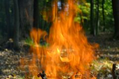 The fire burns in the woods. Fire burns in the woods, high flame, on the background, trees and dry leaves can be seen Stock Photo