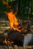 The fire burns in the woods. Fire burns in the woods, high flame, on the background, trees and dry leaves can be seen Stock Photography