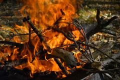 The fire burns in the woods. Fire burns in the woods, high flame, visible lumbering firewood Stock Image