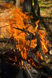 The fire burns in the woods. RnFire burns in the woods, high flame, visible lumbering firewood Royalty Free Stock Photos