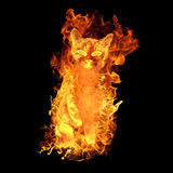 Fire Cat. Mean cat in burning flames Stock Image