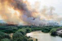 Fire caused by the destruction  humans. Fire caused by the destruction by humans in Spain Royalty Free Stock Photography