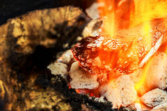 Fire. Closeup of pile  wood burning with flames Stock Image